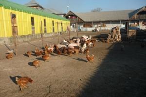 L'élevage des animaux